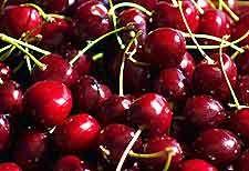 Winemaking Recipe for Cherry Wine, How To Make Cherry Wine: Wine Making Guides