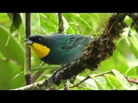 Música Relajante con sonidos de naturaleza, Música para bebes - Lullaby for babies HD - YouTube