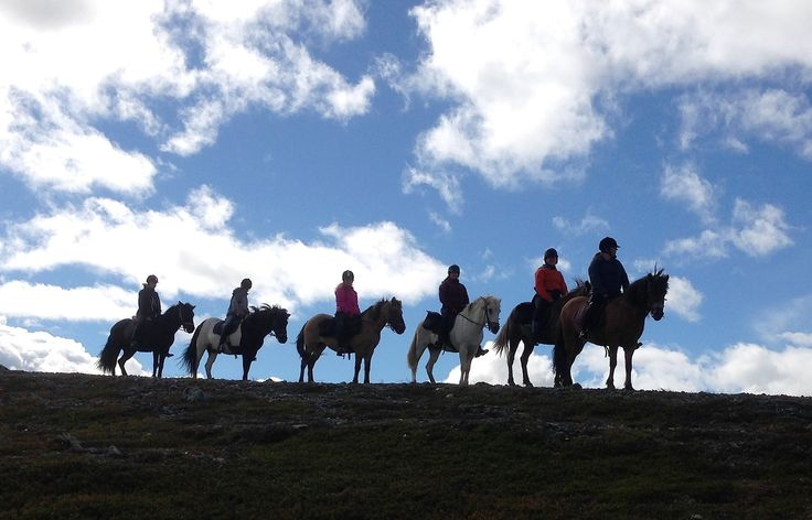 Riding on Icelandic horses in the great nature of northern Sweden @Aspås Turridning i Myckelåsen
