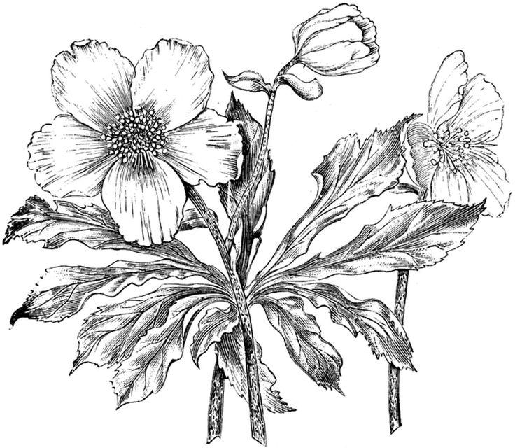 **FREE ViNTaGE DiGiTaL STaMPS**: Free Digital Stamp - Flower Image