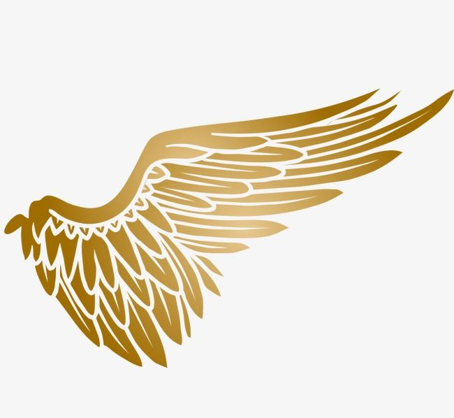 Golden Wings Wings Clipart Soar Fly Png Transparent Clipart Image And Psd File For Free Download Golden Wings Wings Wings Drawing