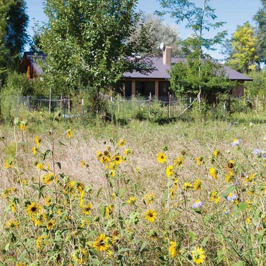 Radical Homemaking: What Permaculture Looks Like In Jacona