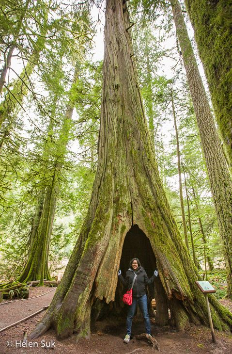 Cathedral Grove in MacMillan Provincial Park is an old-growth forest with trees up to 800 years old - a worthy stop on the drive from Nanaimo to Tofino (Vancouver Island, British Columbia, Canada). Click to learn more.