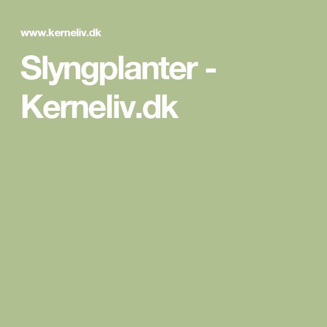 Slyngplanter - Kerneliv.dk