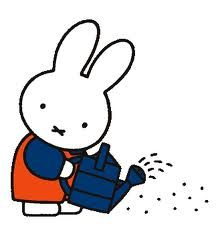 Miffy tries to water the seeds of her dreams but they never seem to grow.