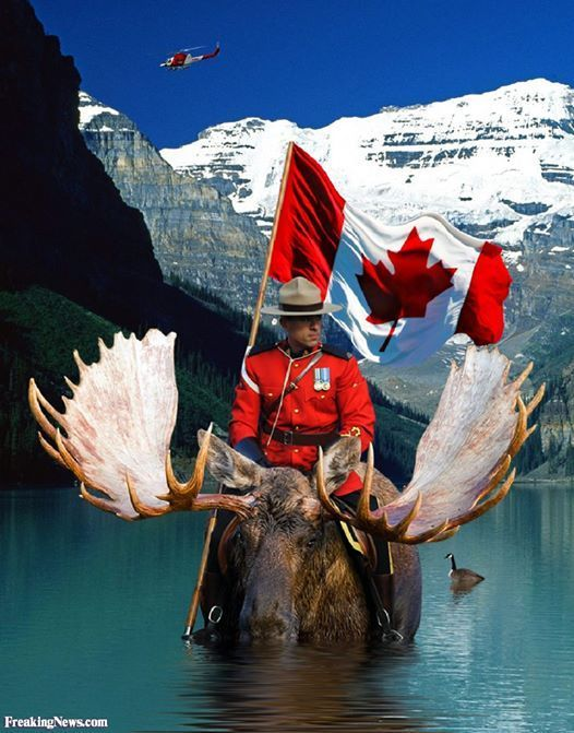 canadian rcmp on moose in lake with flag - Google Search