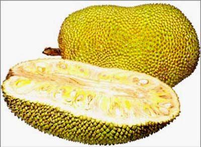 Jaca - consumida fresca, seca e em conserva. É usada no preparo de bebidas, doces, geleias, podendo ser consumida cozida.  Por ser rica em potássio ajuda a reduzir a pressão arterial. É uma boa fonte de vitamina A, vitamina C, tiamina, niacina, ferro, sódio, cálcio, fibras, fósforo, etc. As folhas são úteis para curar a febre, furúnculos e doenças de pele. O látex do fruto é útil no tratamento de faringite.