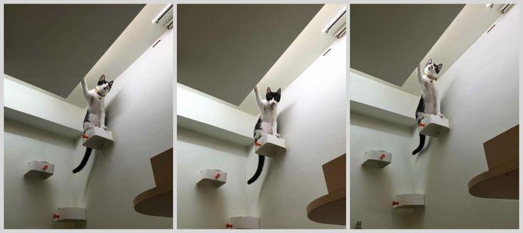 Enudden cat steps on wall ikea hackers cat steps ikea