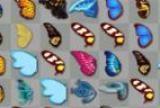 Mariposa kyodai, Juego Mariposa kyodai Gratis, Haz clic en parejas de alas de mariposa abiertas para eliminarlas del tablero en este juego de parejas.