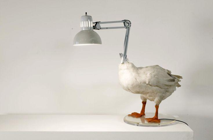 Sebastian E.'s Duck Lamp