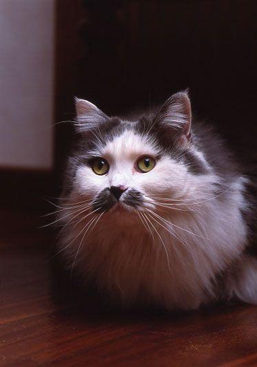 #Mathilda #Cat #Amazing #Beauty #Moustache #Animal #Love #Forever #NeverForget #Gatto #LaMeraviglia #LaGatta #Baffi #AmoreInfinito #NelMioCuore #UnaVita #Thilda #Fusa #LaMiaOmbra