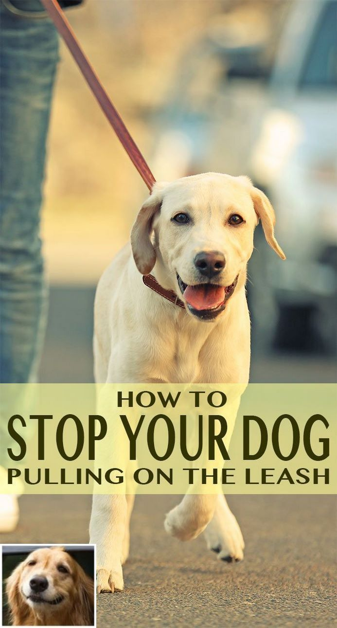Stop Dog Jumping And How To Train Your Dog To Be Calm Check The