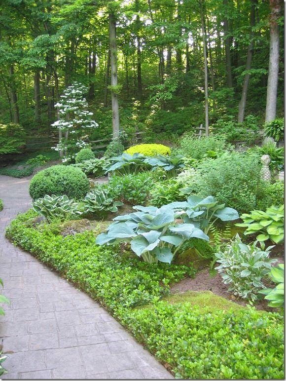 A Pinner Said Early Spring Roses Boxwood Peonies Hydrangeas Hostas Ferns An