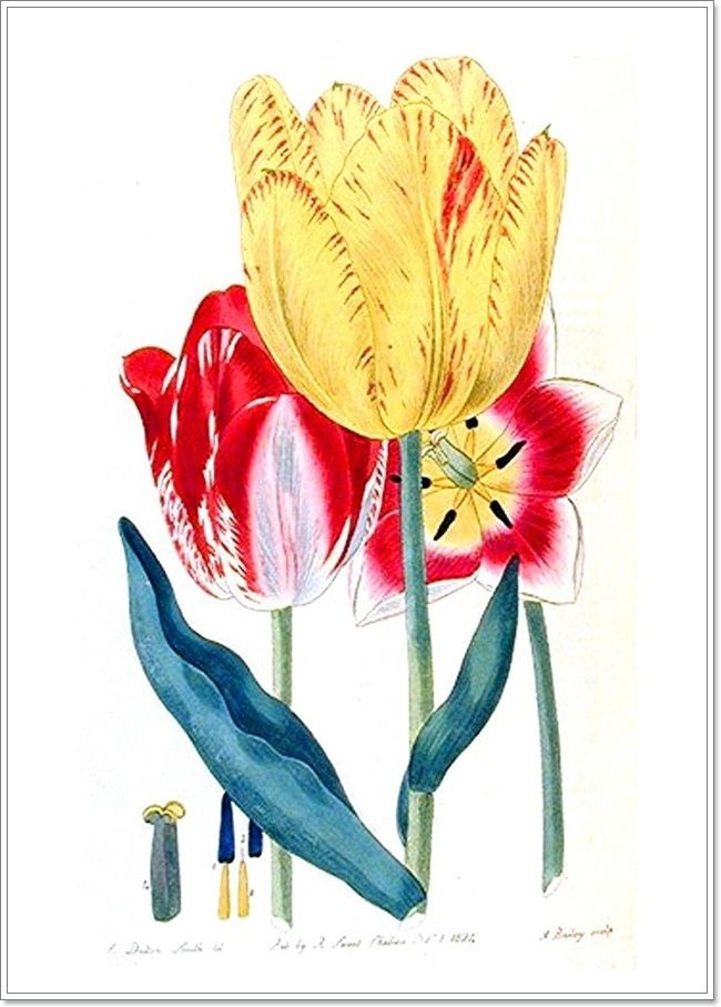 Весенние цветы. . Обсуждение на LiveInternet - Российский Сервис Онлайн-Дневников