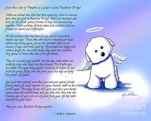 Rainbow Bridge Bichon Angel Print by Kim Niles