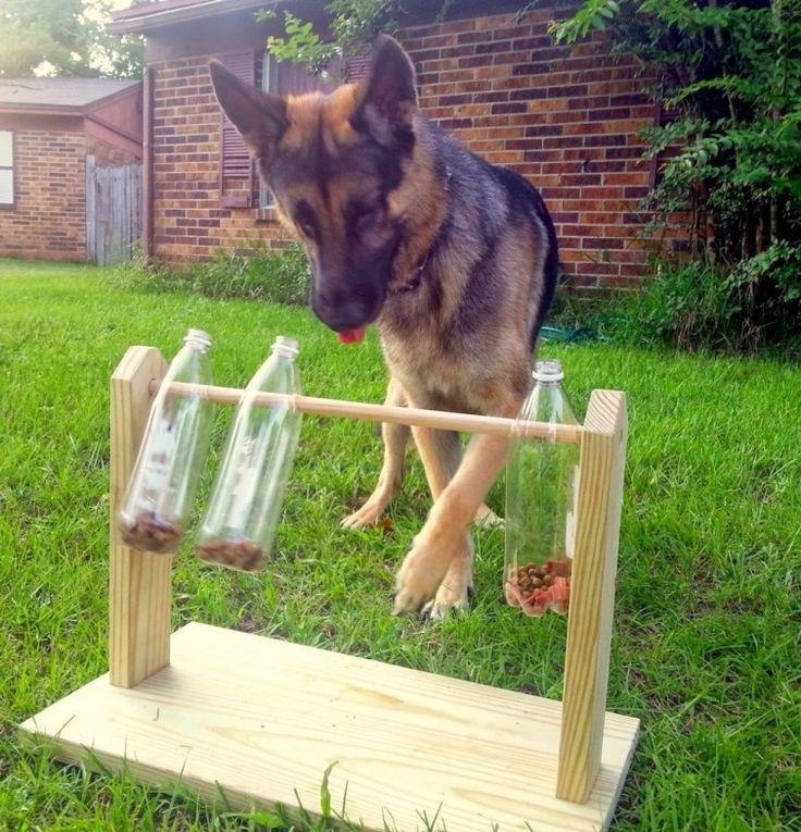 Cómo hacer un comedero-juguete para perros con botellas de plástico | Notas | La Bioguía