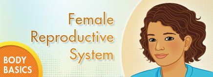Good, basic articles and interactive diagrams for going over reproductive system and health with kids.