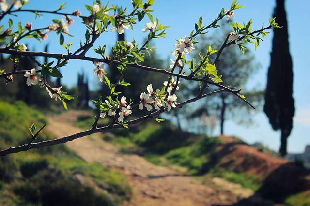 Έπρεπε να ανεβάσω κι εγώ μια αμυγδαλιά. Μη με πούνε και σνομπ.  #almondtree #almondblossom #spring #nature #naturephotography #naturelovers #nature_lovers #nature_shooters #nature_greece #tree #flowers