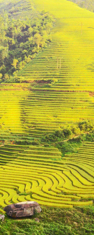 サパの棚田は、『世界で最も美しい棚田11選』に選ばれました。(Sapa was included in eleven most beautiful rice terrace list in the world.)
