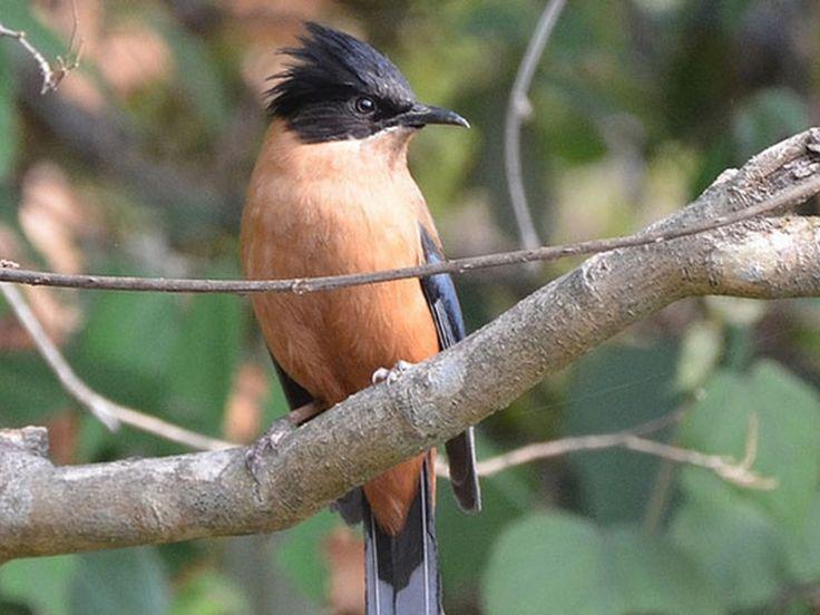 Binsar Wildlife Sanctuary - in Uttarakhand, India