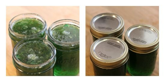 How to Can Jalapeno Pepper Jelly Recipe