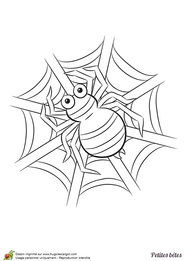1000 images about coloriage de papillons et autres insectes on pinterest belle mandalas and - Coloriage araignee ...