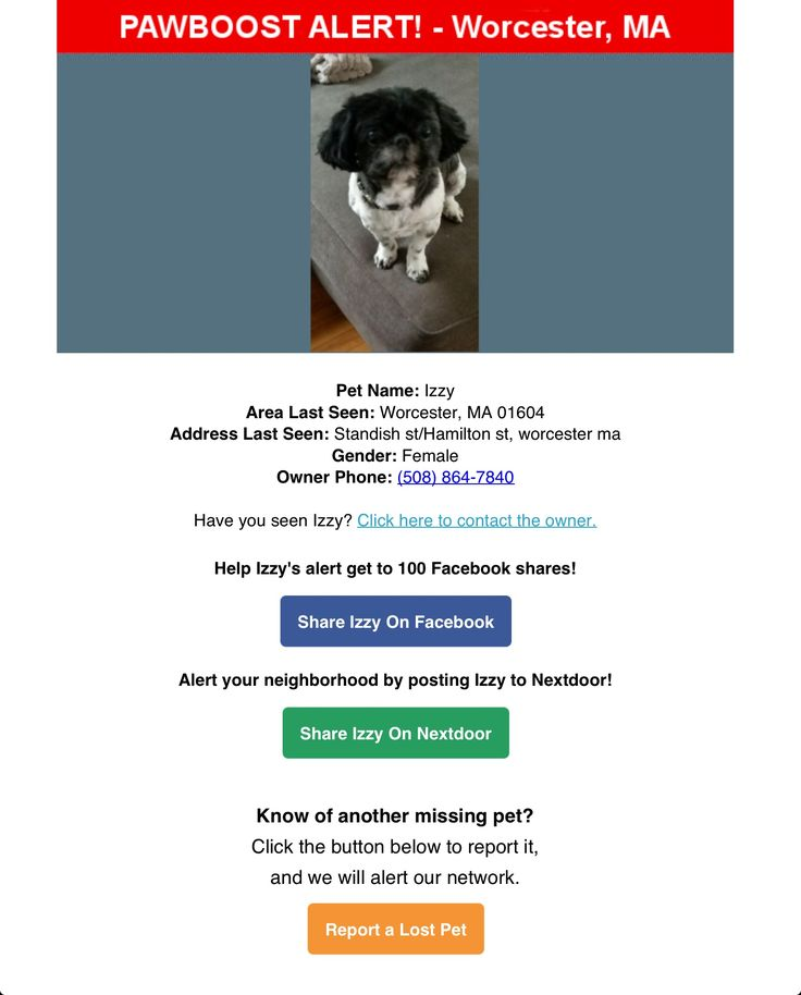 Lost Female Dog Named Izzy: Worcester, MA