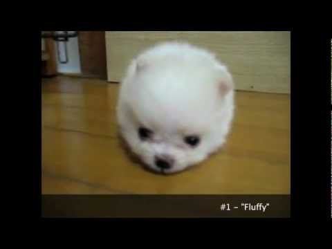 1000 Ideas About Cutest Puppy Ever On Pinterest Cutest