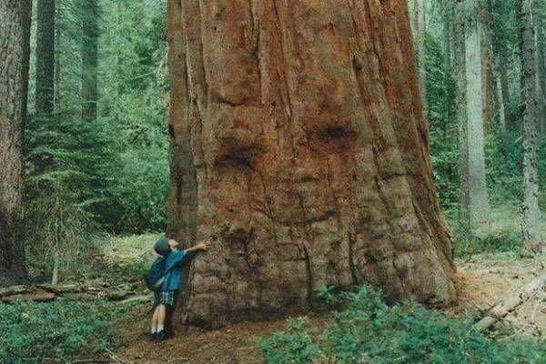 19 fa, ami valójában valami egész másra hasonlít! A 7. képnél elakadt a lélegzetünk!