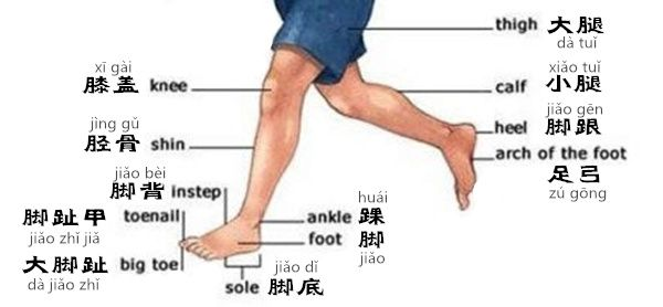 Learn Chinese in an Easy Way – Body Part 2 with audio [www.digmandarin.com]