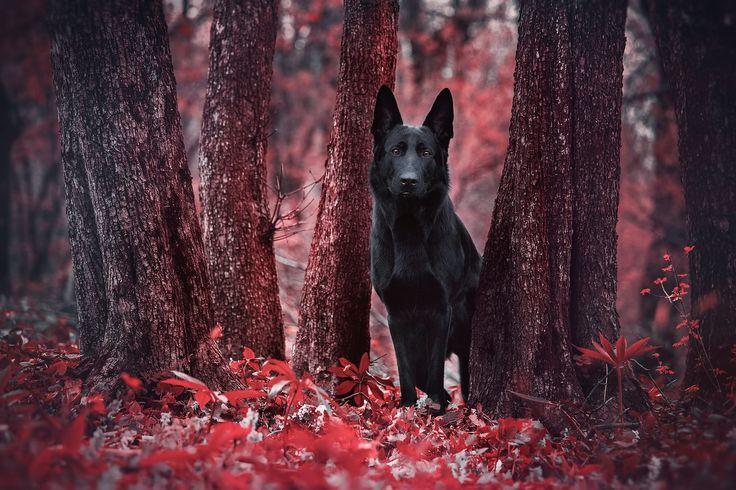 https://flic.kr/p/EYQLAb | Blood Forest Spirit