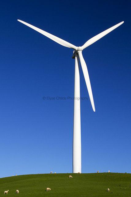 Sheep and wind turbine - Te Apiti Wind Farm | © Elyse Childs Photography