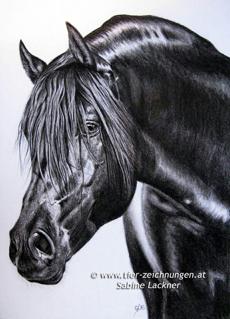 pre hengst pura raza espanola stallion pferdezeichnung