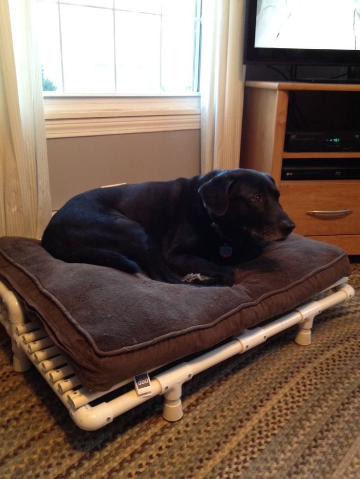 Best 25 raised dog beds ideas on pinterest homemade dog for Pvc cat bed