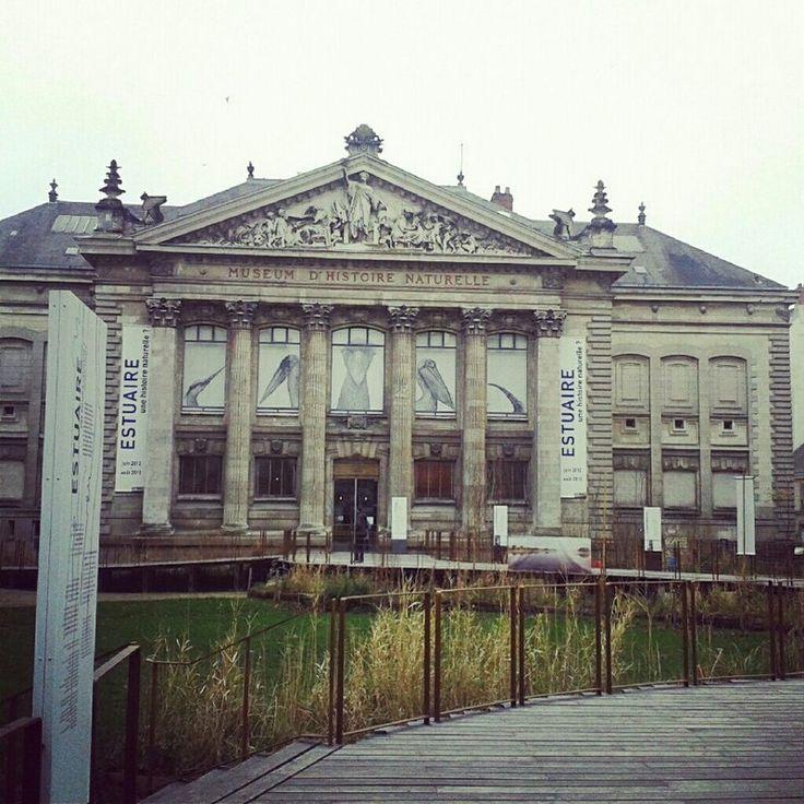 Une visite au Muséum d'Histoire Naturelle (Nantes) + résultat concours ! | Bull'Elodie http://www.bullelodie.com/2013/02/une-visite-au-museum-dhistoire.html