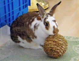 Some of their favorite toys are:  Edible timothy grass balls, Willow baskets or wreaths, Small dried willow or natural grass squares, Edible...