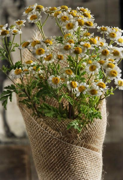 Chamomile bouquet, small daiseys- adorable!