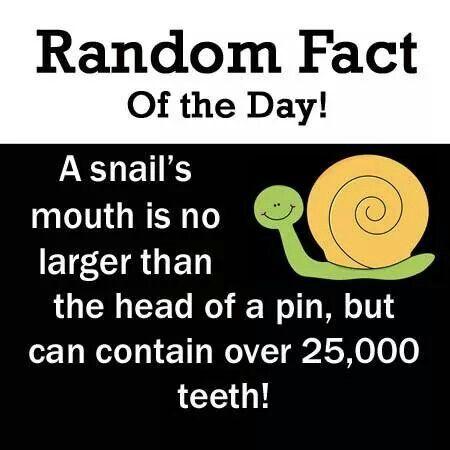 Random fact http://tmiky.com/pinterest