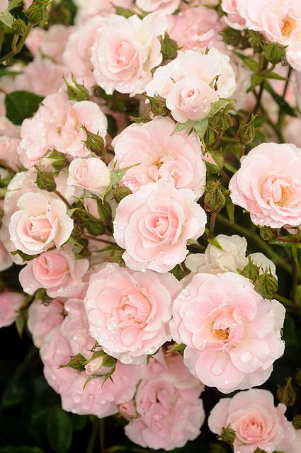 I hope you enjoyed your visit to ** Always Lovely in Pink ** .  Please come back as often as you like.