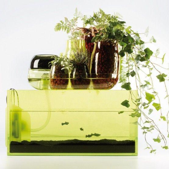 1000 ideas about indoor pond on pinterest koi fish pond for Indoor koi fish tank