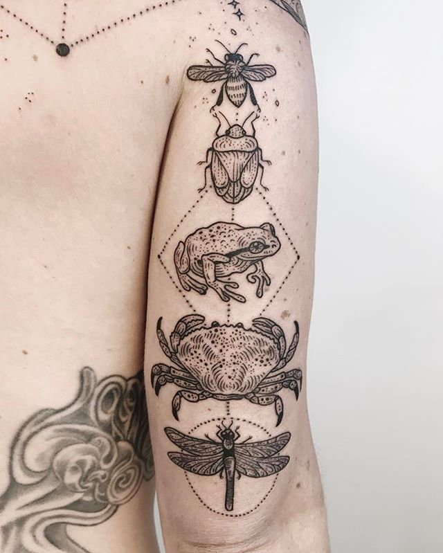 Honeybee, green stink bug, pacific tree frog, dungeness crab, and green darner dragonfly - part of a larger piece! Thanks Lauren! ✨