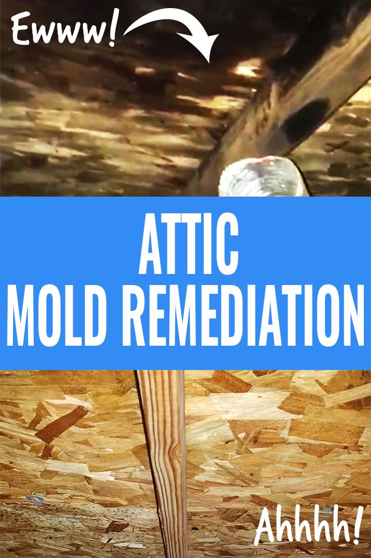 Attic Mold Remediation Calling In The Pro S Mold Remediation Cleaning Mold Attic