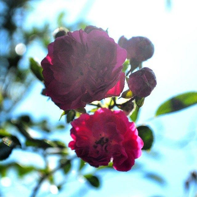 http://anaonofrei.blogspot.com