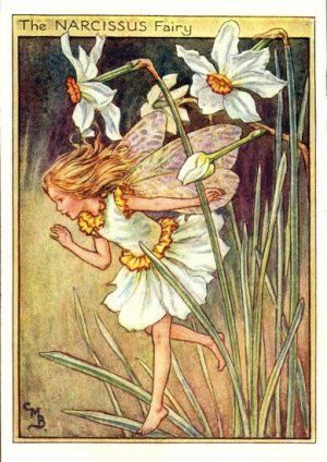 Narcissus Flower Fairy Print c.1950 Fairies by Cicely Mary Barker