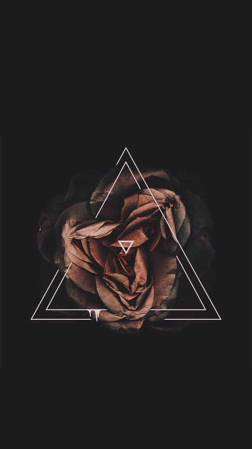 flowers, rose, and black resmi