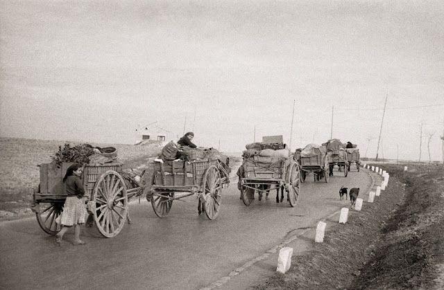 Caravana de traperos en la carretera de Madrid a Alcalá de Henares, 14 de diciembre de 1951 - Santos Yubero
