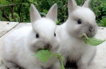 Разведение кроликов в домашних условиях. Советы для начинающих по содержанию и выбору породы кроликов с видео