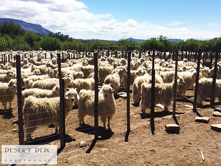 There are a few activities you can do on the farm while staying with us such as working farm activities – sheep / angora / cattle –farming. Link: http://ow.ly/Hb1m307WopS