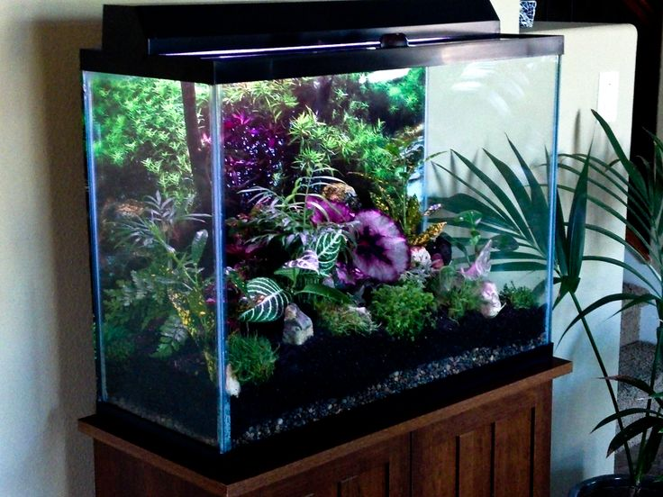 Turned my 50 gal aquarium into a terrarium creative for Fish aquarium garden
