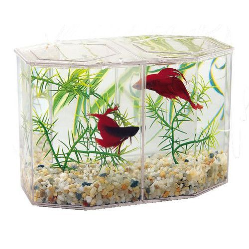 Small, big, rectangled, cornered or curved, choose your #aquarium atat a reasonable price.